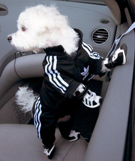 felpa cani adidas