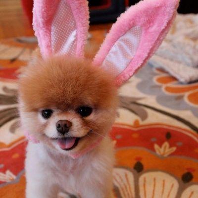 Cani con orecchie da coniglio pasquale