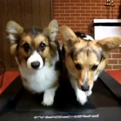 Cani sul tapis roulant