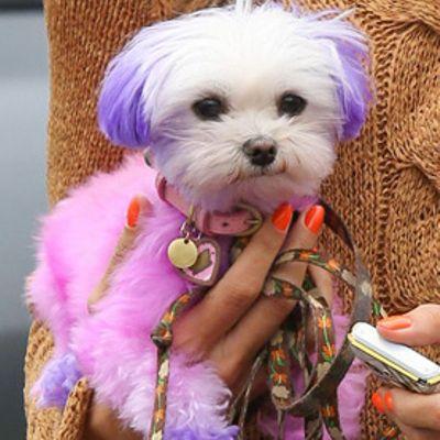 Cani tinti di rosa