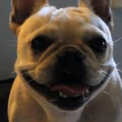 Anche i cani pazziano con i laser