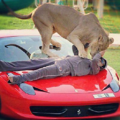 Humaid balla coi leoni (sui tetti delle Ferrari)