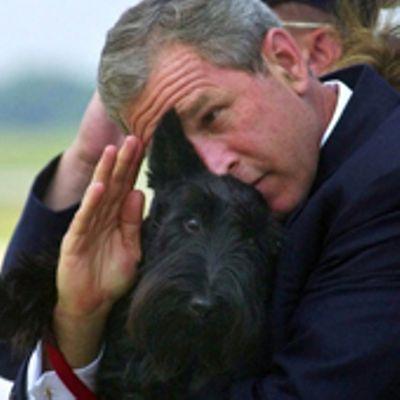 George W. Bush è un pittore e predilige soggetti canini