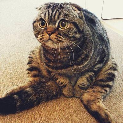 10 foto di Stephen, il gatto buffo che si siede come gli umani