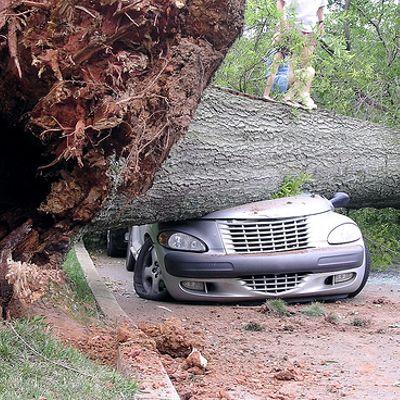 Tipa ubriaca guida con un albero infilzato nella macchina senza accorgersene