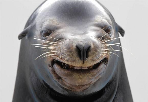 Happy-Animal-1