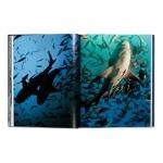 michael-muller-sharks-3