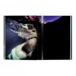 michael-muller-sharks-4