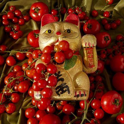 Certosa Records presenta il Gato Tomato EP